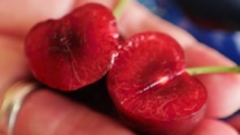 The Market Review - Coral Cherries