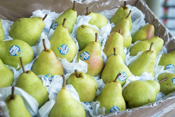 Bartlett Pears Grown in America