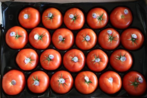 Case of Beefsteak Tomatoes