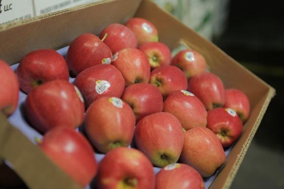 Gala Apples Organic