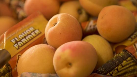 California Gold Apricots