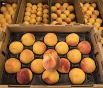 Baby Crawford Peaches