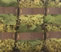 Thomson Seedless Grapes