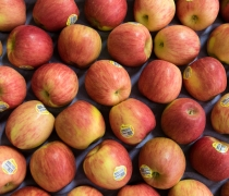Shasta, produce, farming, agriculture, food, fruit, vegetables, Apples, fall, tasty, healthy, lifestyle, wholesale