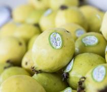 Mexican Guava