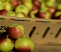Fancy, lady, green, apple, red, fruit, small, petite, healthy, lifestyle, shasta, produce, farming, culture, agriculture, organic