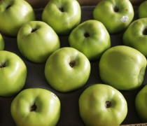 Pippin Apples