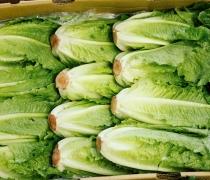 Case of Romaine Lettuce