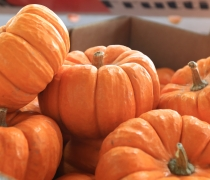 Mini, pumpkins, fall, season, holidays, autumn, october, november, decoration, soup, bowl, fun, jackalantern, candle, dessert, pie, thanksgiving,