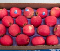 Apple, Produce, pacific, fruit, shasta, farming, wholesale, food, short, series, fun, healthy, lifestyle, winter, pink, rose, cute, tasty
